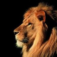 Lion-in-exile