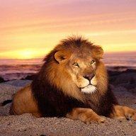 Liononthebeach