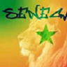 Senegal Lion